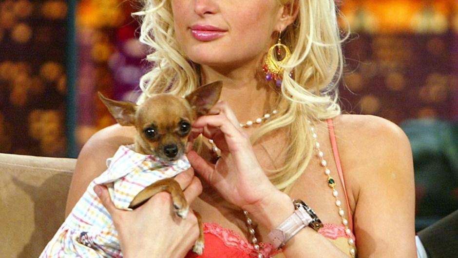 paris-hilton-tinkerbell-dog