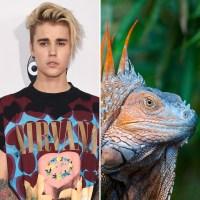 justin-bieber-lizard