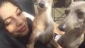 norman-bambi