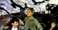 horror-the-birds