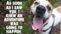 animal-shelter-tinder-dog