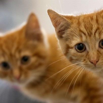 cat-paradise