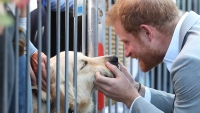 Prince-Harry-Puppies