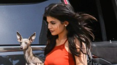 Norman Is Alive and Well, Y'all! Kylie Jenner Clears up Rumors Something 'Happened' to Her Dog