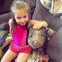 Celeb Pet Pigs 1