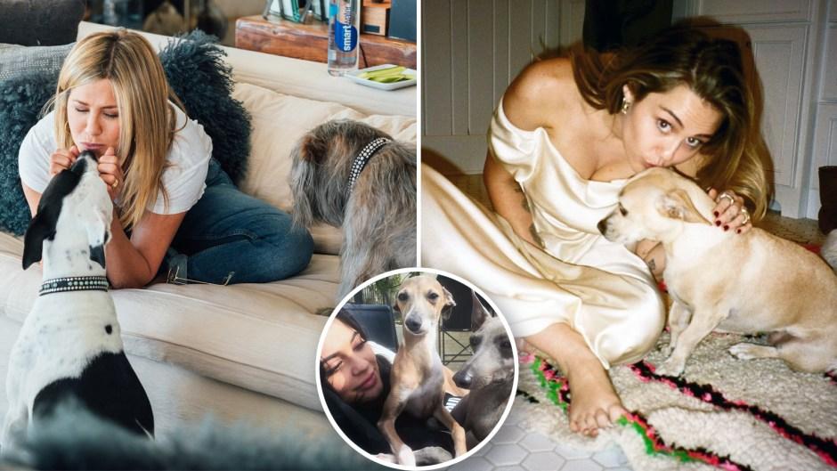 Best celeb dog moms