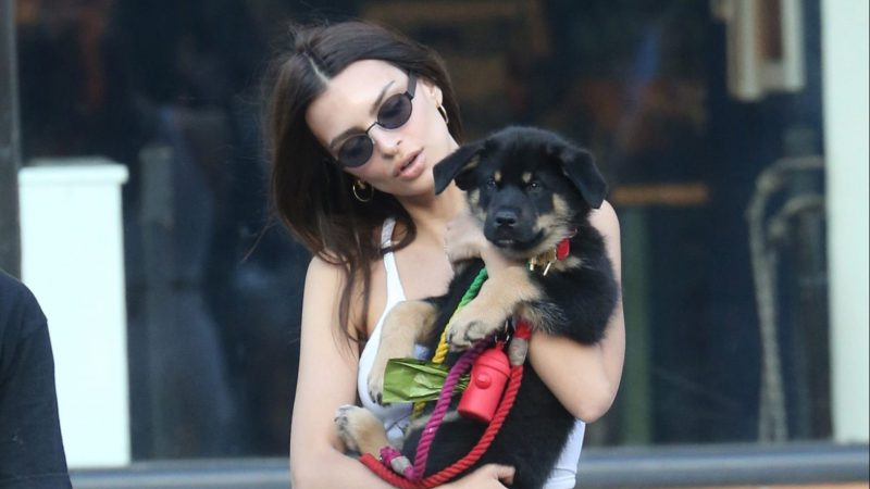Emily Ratajkowski's Puppy Colombo Just Had His First Dog Park Visit and We're Crying