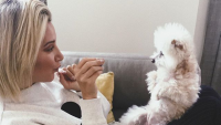 Ashley Tisdale and Her Dog Maui