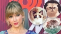 Guide to Taylor Swift cats