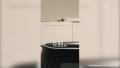 Bird Flies Into Khloe Kardashian's Garage — Watch the Video!