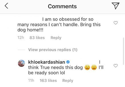 Khloé Kardashian May Be Giving True Thomson a Dog