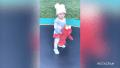 True Thompson Dances With Elmo on a Trampoline