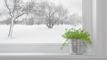 Houseplants You Can Grow in Winter