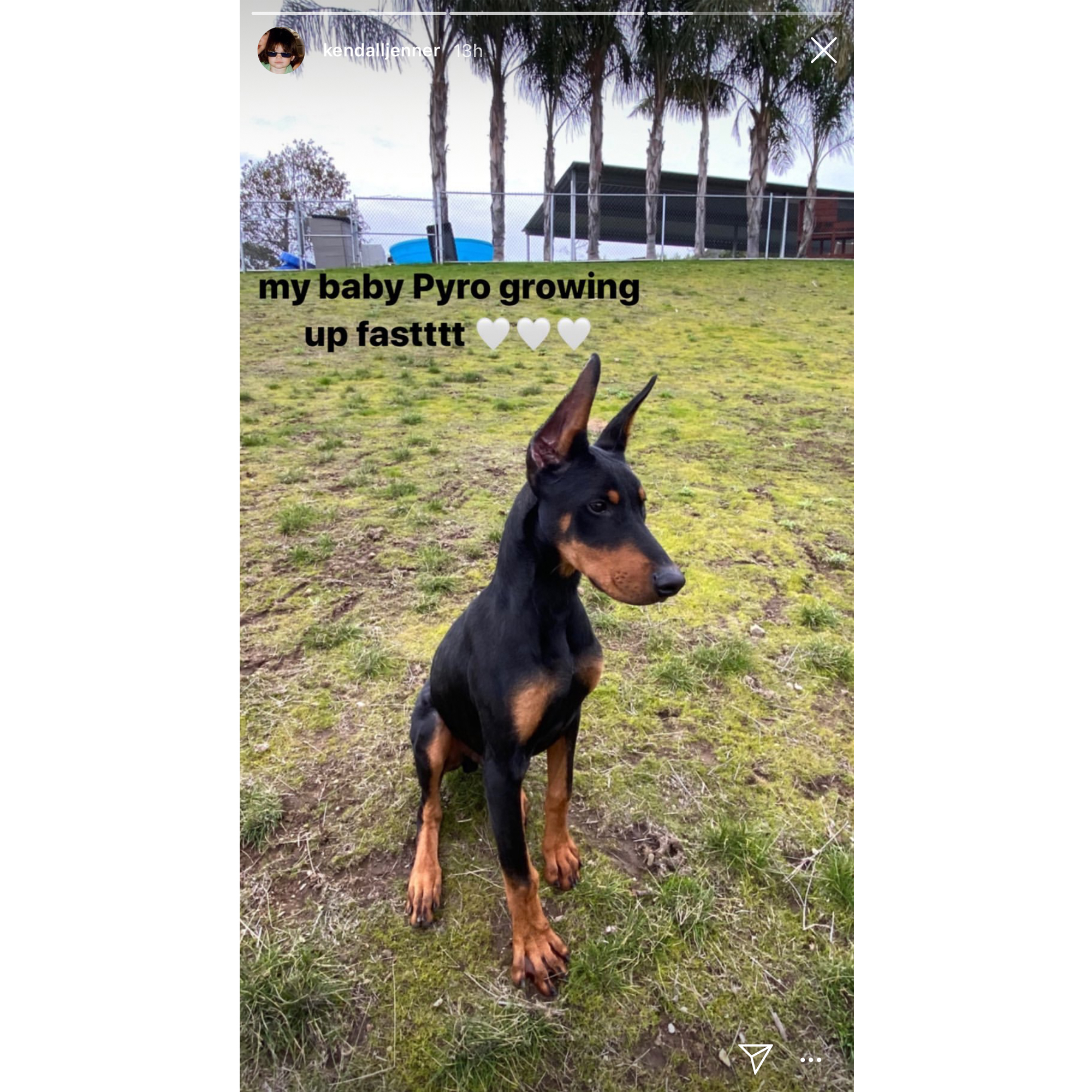 Kendall Jenner Reveals Name Of Her Doberman Dog In Cute New Photo