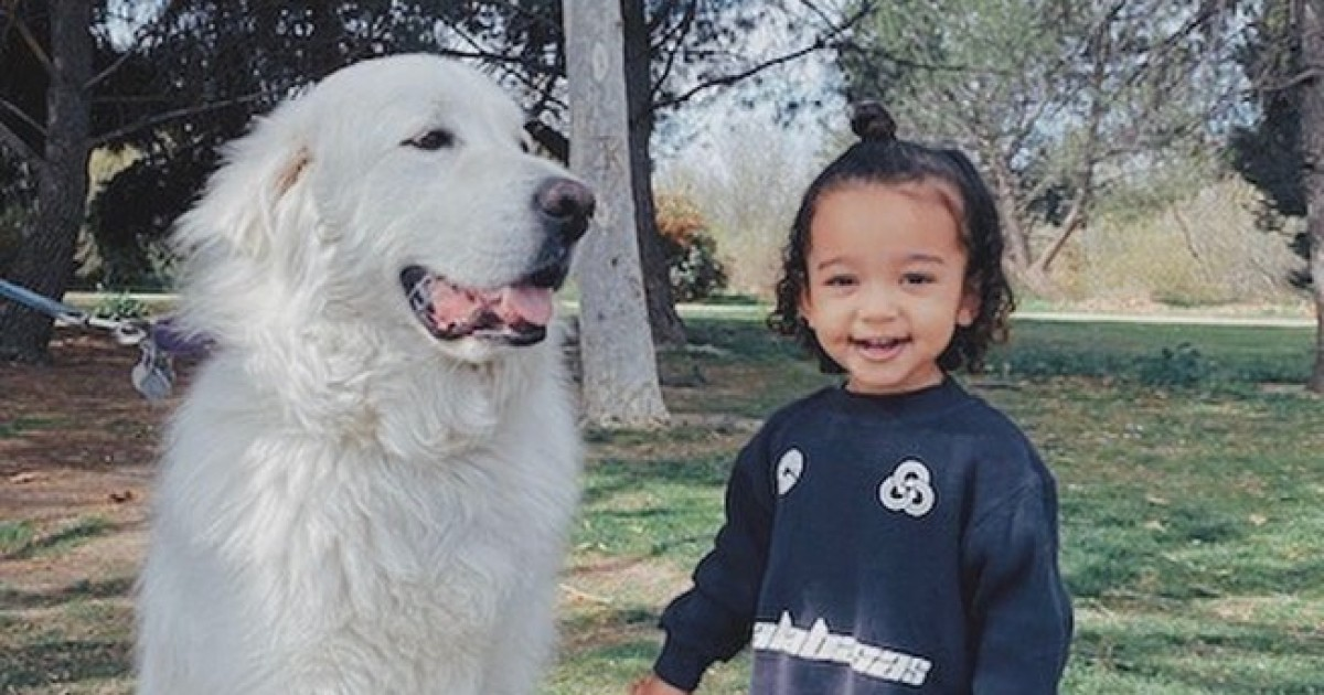 These Photos of Chicago West Petting a Dog Are Everything