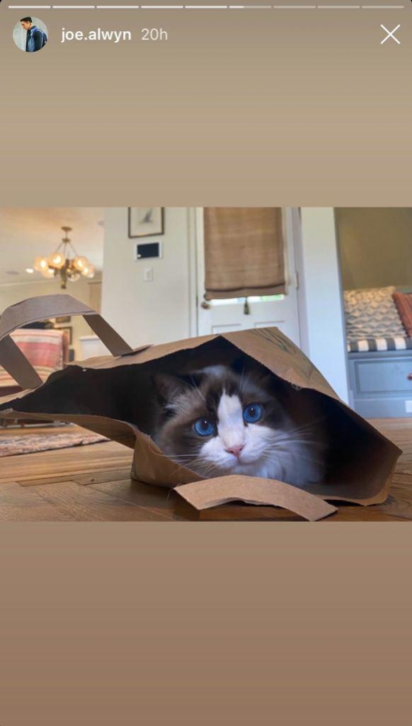 Joe Alwyn Shares Photo of Taylor Swift's Cat