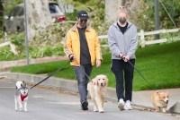 Joe Jonas and Sophie Turner Walking Dogs
